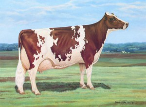 Ideal Ayrshire Cow