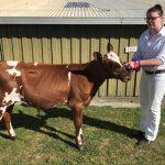 2018 Tasmanian Calf Day Results